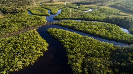 preservacao das florestas amazônica