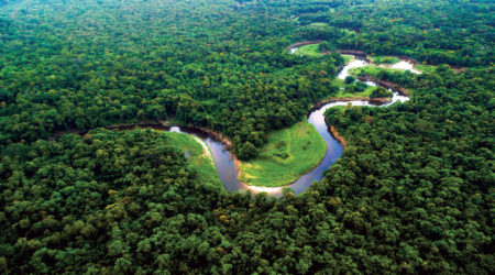 Amazônia Vegetação