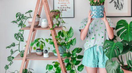 plantas em casa: como ter