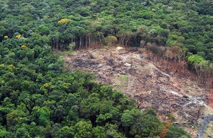 A Amazônia Internacional, situa-se em 9 países na América do Sul, a saber Brasil, Bolívia, Colômbia, Equador, Guiana, Guiana Francesa, Peru, Suriname e Venezuela.