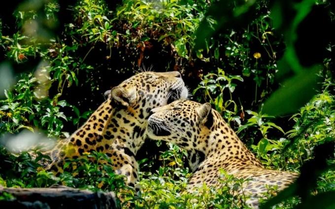 amazonia-a-maior-biodiversidade-falaze-vaiali